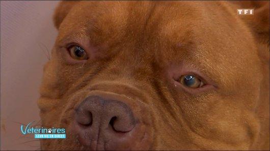 Revoir vétérinaires : leur vie en direct en replay